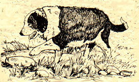Barking Rock Farm - Jacob & Barbados Blackbelly Sheep